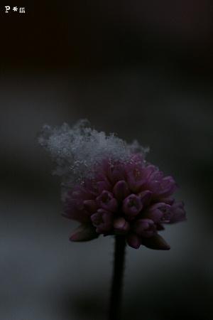 Snow12291.jpg