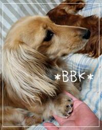 bbk5152.jpg