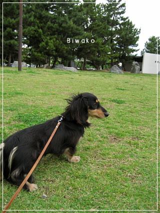 biwako5193.jpg