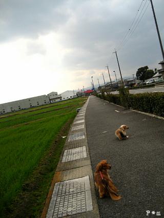 heijitu2193.jpg