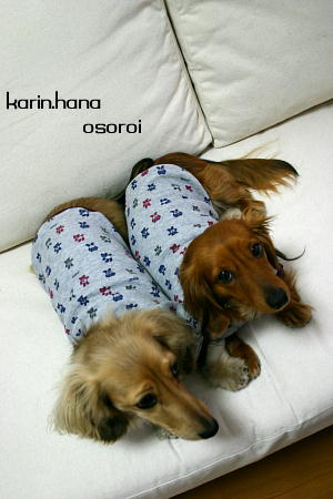 khosoroi226.jpg