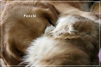 panchi1112.jpg