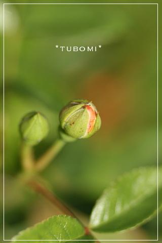 tubomi2.jpg