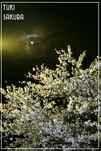 tukisakura414.jpg
