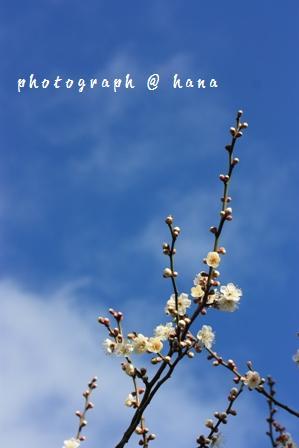 春をお届けに