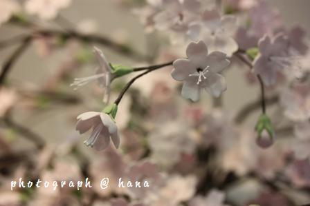 お菓子で桜
