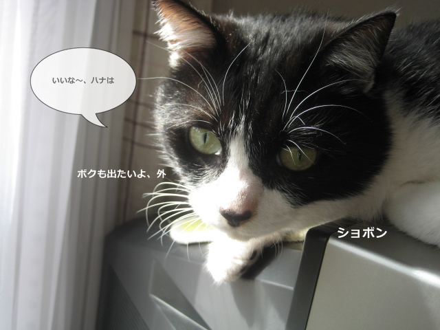 5IMG_0507.jpg