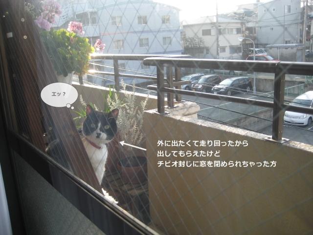 6IMG_0483.jpg
