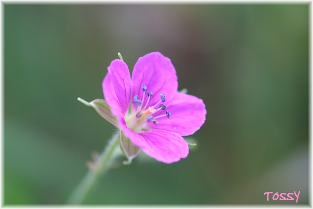 画像2 赤花