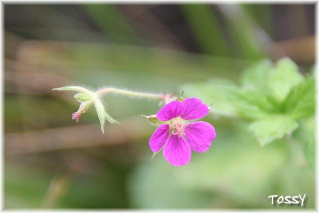 画像4 赤花