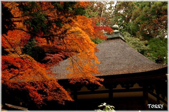 モミジ3 観心寺