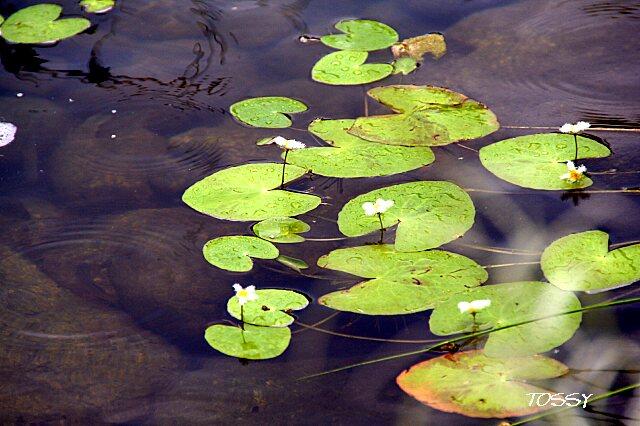 水辺の植物2