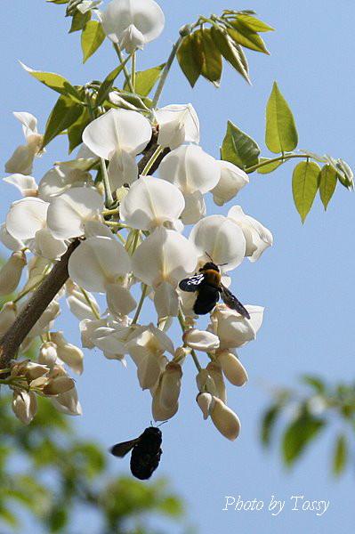 フジ2 大きなハチ