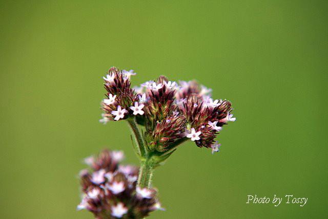 河川敷の花2