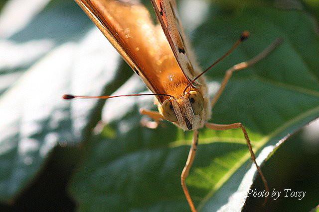 カメラ目線の蝶