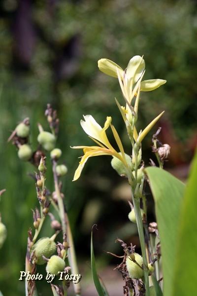 水生植物1-2