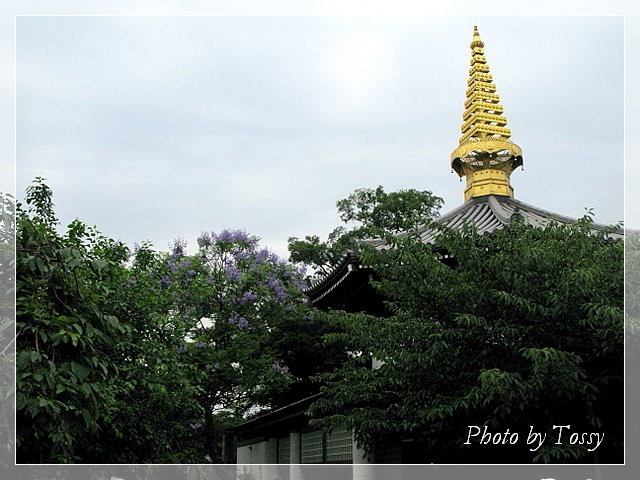 ジャカランダと念仏堂