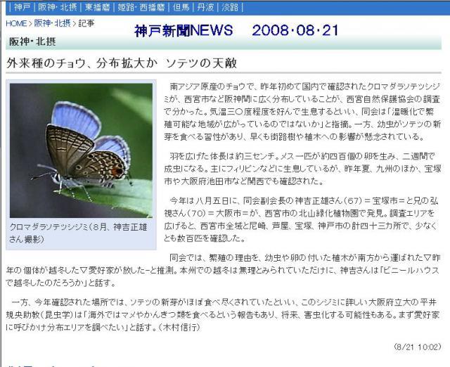 シジミチョウのニュース