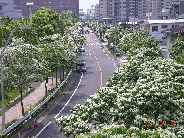 熱田神宮近くの並木道