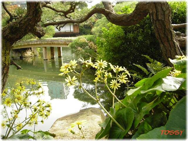 相楽園庭園