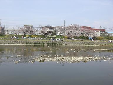 hanami6.jpg