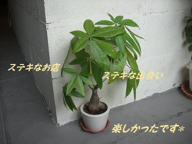 niji10_20090707191100.jpg