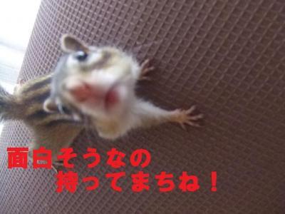 007_convert_20090723205202.jpg