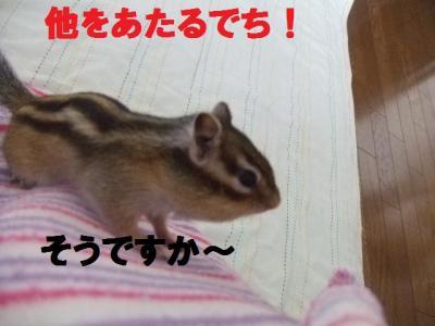 010_convert_20090903131523.jpg