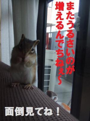 011_convert_20090811181130.jpg