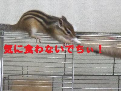012_convert_20090701174517.jpg