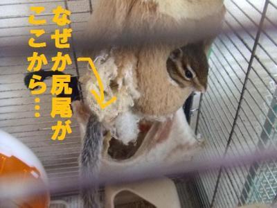013_convert_20090713224355.jpg