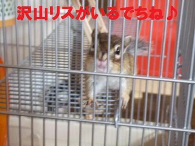 013_convert_20090822073540.jpg