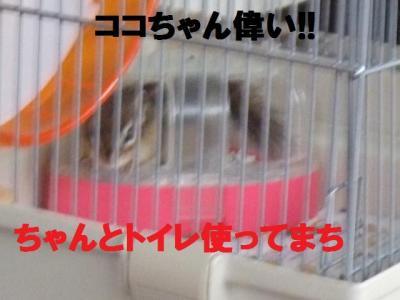 015_convert_20090822073605.jpg