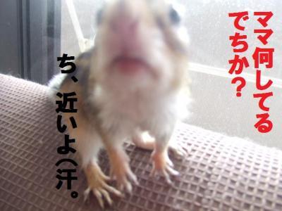 016_convert_20090901173914.jpg