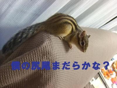 022_convert_20090702145733.jpg