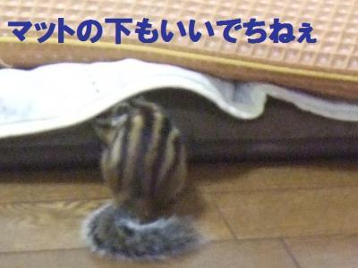 024_convert_20090813085747.jpg