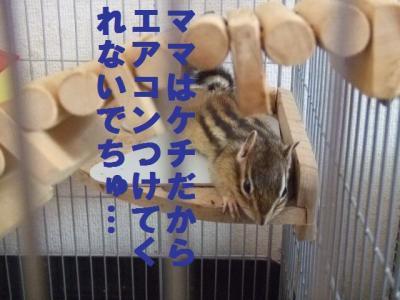 043_convert_20090719074041.jpg