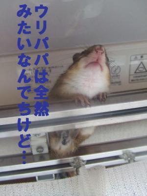 088_convert_20090717225245.jpg