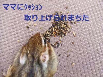ウリの内々1