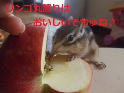 リンゴとモモ1