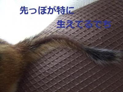 チビタの尻尾2