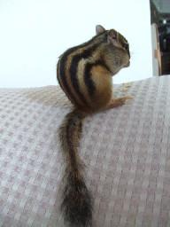 ウリの尻尾
