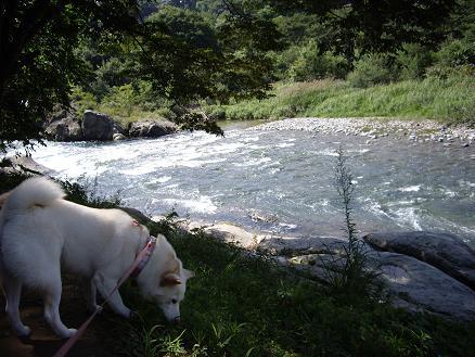 うわぁ~、綺麗な川~