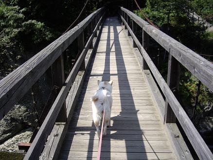 笹笛橋を渡ってます