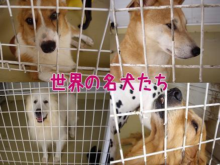 世界の名犬たち