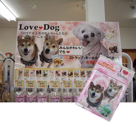 柴犬ひかりちゃんといちごちゃん発見!