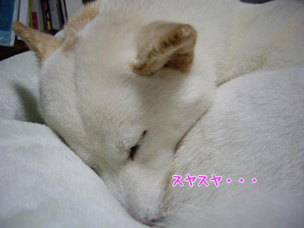 よく寝てる^^