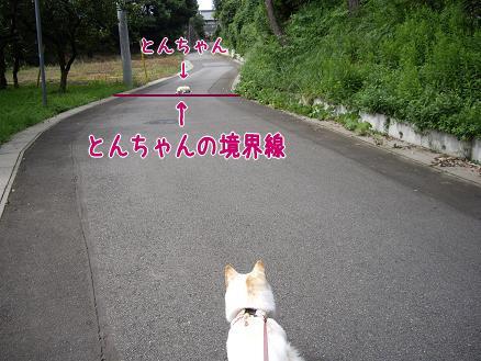 とんちゃんの境界線