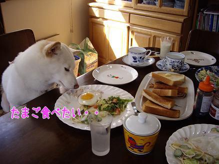 凛の豪華な朝食!