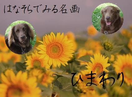 Hana Sora SUNFLOWER